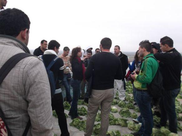 artists explains lettuces